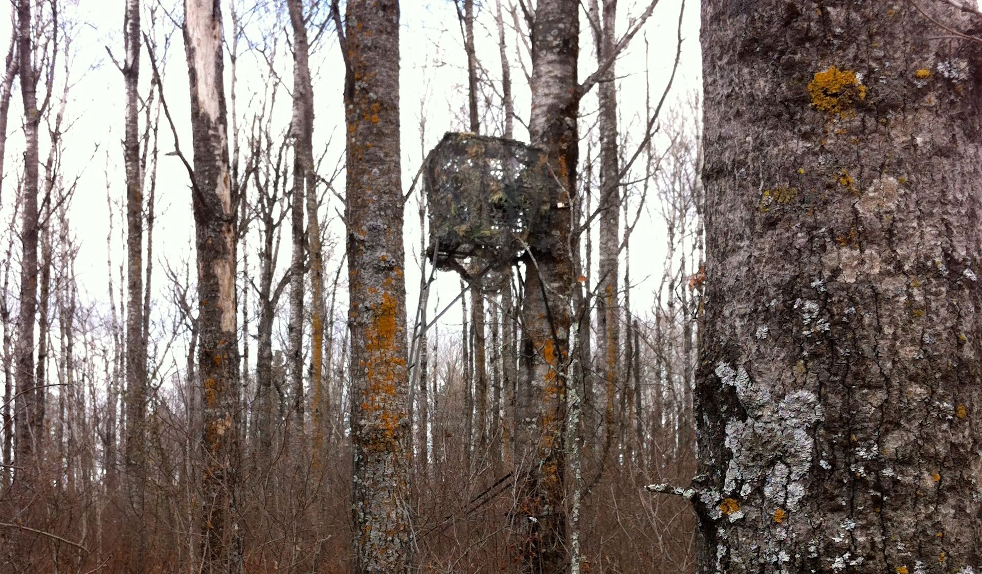 Big Game Tree Stand Blinds How To Create Tree Stand