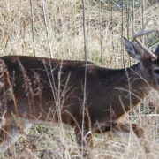 archery hunting blinds 5 mistakes to avoid in October | Big Game Treestands